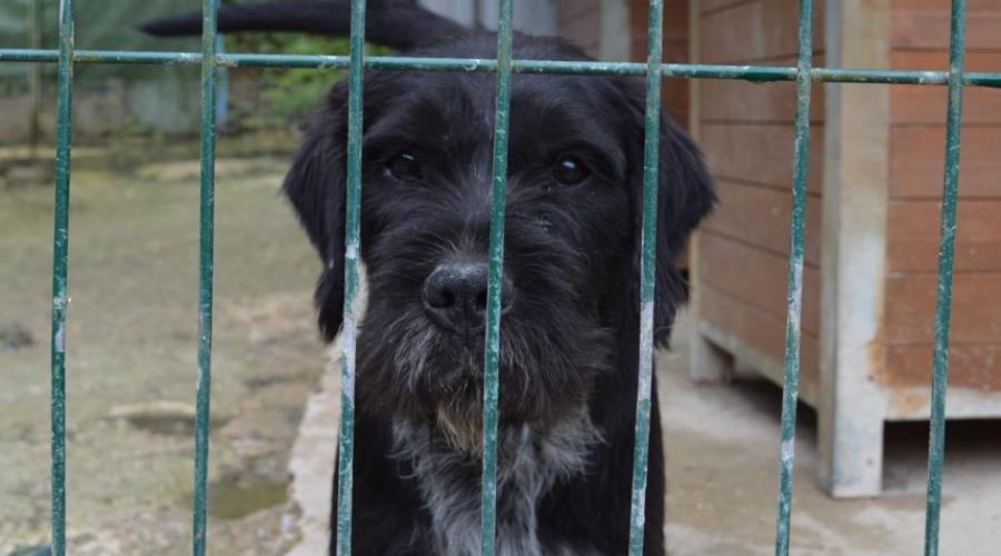 FRERO - griffon 4 ans  (3 ans de refuge)   Spa de Marsac Perigueux (24) Dsc_0570